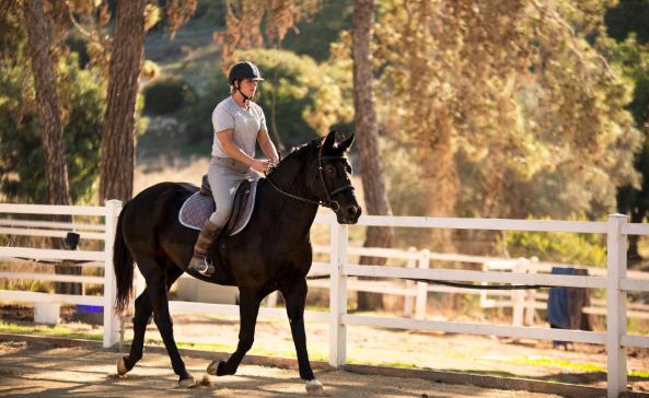 Alt om hest, ridning, stell og konkurranser!
